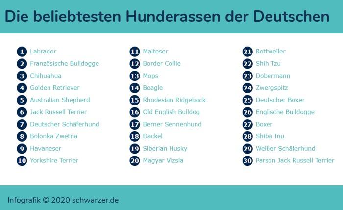 Infografik: Die beliebtesten Hunderassen der Deutschen