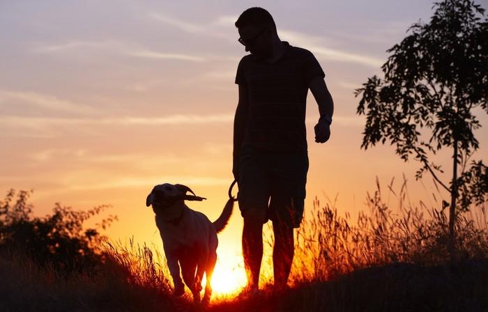 Ein Labrador Retriever liebt lange und arbeitsreiche Spaziergänge und anstrengende Aktivitäten jeglicher Art. (Foto: shutterstock - Jaromir Chalabala)