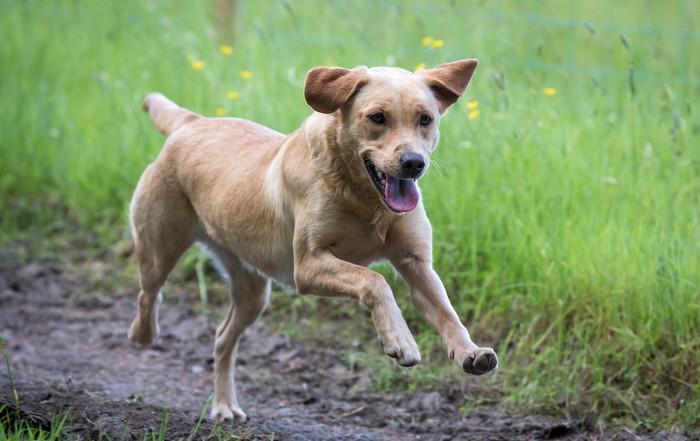 Labrador Retriever-Welpen wünschen sich ein vorbereitetes Zuhause. (Foto: Shutterstock Daz Stock)