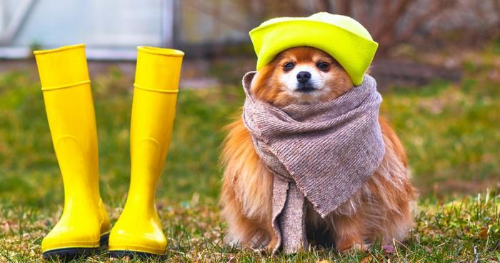 bei den Aktivitäten für den Pomeranian sollte man Ruhezeiten einplanen. (Foto: shutterstock - Daria Photostock)