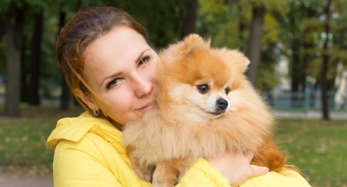 Die Erziehung des Pomeranian ist zum einen unverzichtbar, aber zum anderen auch eine reine Freude. (Foto: shutterstock - EugeneEdge)