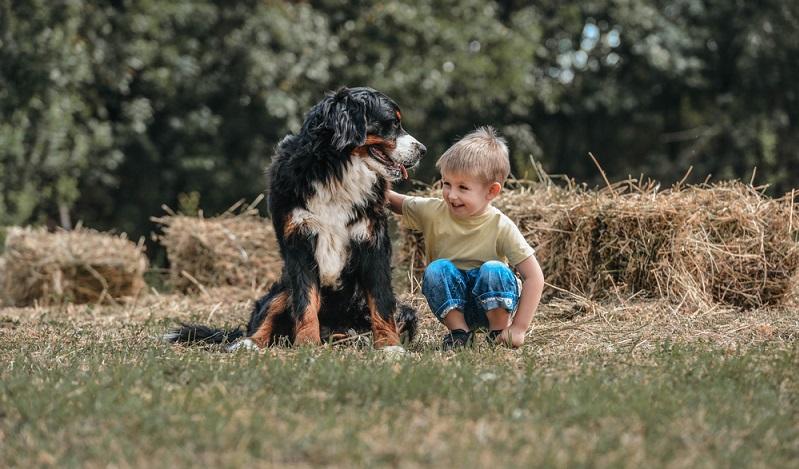 Als sehr menschenbezogener Hund mag er auch nicht lang allein sein. Für Familien mit Kindern eignet sich der Berner Sennenhund gut. ( Foto: Shutterstock-Djordje Ognjanovic)