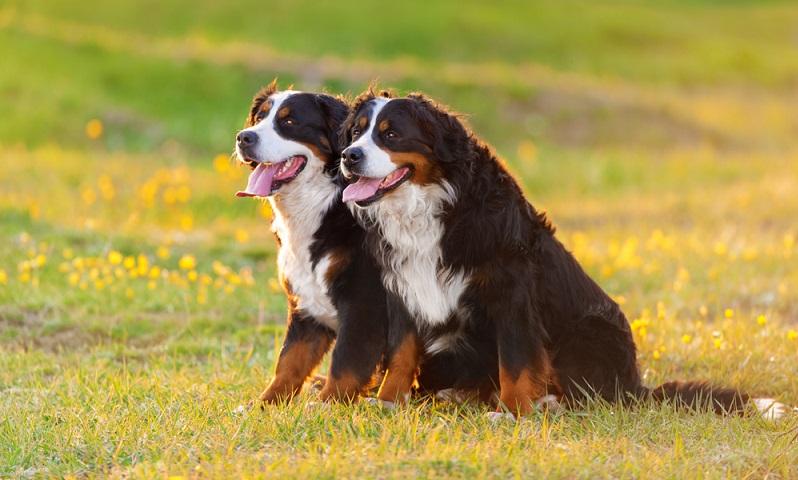 Hat man einen Züchter gefunden und einen Besuchstermin vereinbart, heißt es aufmerksam bleiben und dem Züchter im Gespräch auf den Zahn fühlen. ( Foto: Shutterstock- Kwadrat)