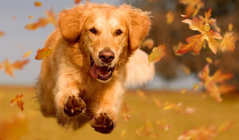 Wer sich einen Hund anschaffen möchte, sollte sich als erstes seine eigenen Lebensbedingungen anschauen und dementsprechend die geeigneten Hunderassen vorab anschauen. ( Foto: Shutterstock-_Photo-SD)