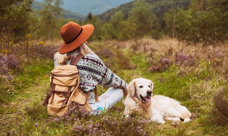 Der Golden Retriever aus der sogenannten Show Linie eignet sich auch sehr gut für Familien mit Kindern. Durch seine ausgeglichene und freundliche Art kann er sich gut in eine Familie integrieren. ( Foto: Shutterstock- Prystai )