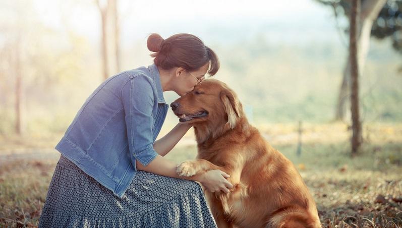 Einen seriösen Golden Retriever Züchter findet man bei einem Golden Retriever Zuchtverband oder beim Verband für das Deutsche Hundewesen VDH. ( Foto: Shutterstock- Wittybear )