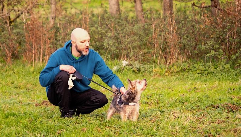 Einen Yorkie zu erziehen ist schon eine kleine Herausforderung. Wie alle Terrier hat der Yorkshire auch seinen eignen Kopf. ( Foto: Shutterstock-mark_gusev)