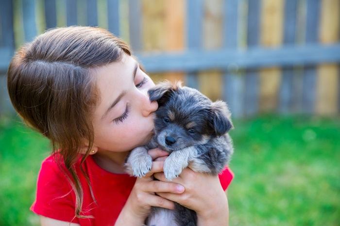 Der Chihuahua hat die perfekte größe zum Spielen mit kleinen Kindern. Dennoch ist der kleinste Hund der Welt nicht für Anfänger geeignet. (Foto: shutterstock / lunamarina)