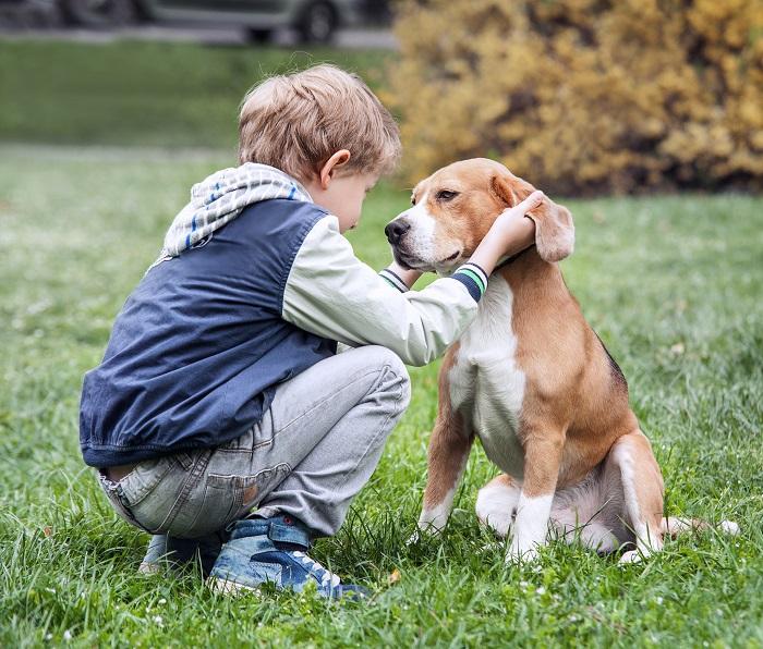 Der Beagle ist nicht nur in Kinderfilmen ein beliebter Begleiter für kleine und große Abenteuer. (Foto: shutterstock.com / Soloviova Liudmyla)