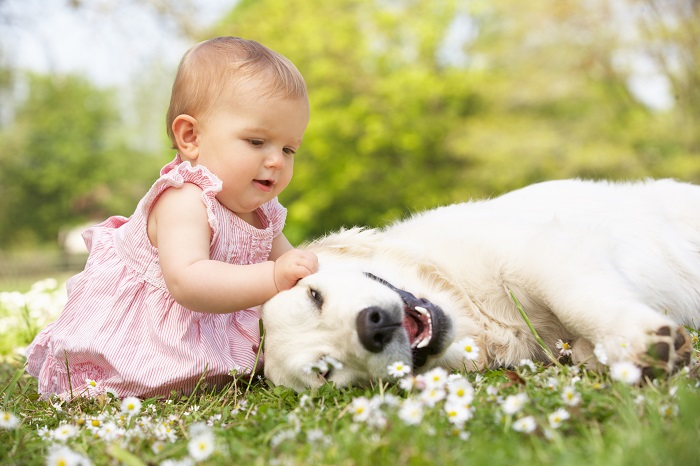 Besonders wenn kleine Kinder im Haus sind muss der Familienhund sehr gelassen sein. (Foto: shutterstock.com / Monkey Business Images)