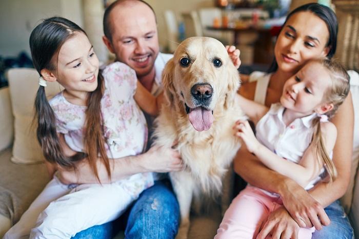 Der Golden Retriever ist der beliebteste Familienhund. (Foto: shutterstock.com / Pressmaster)
