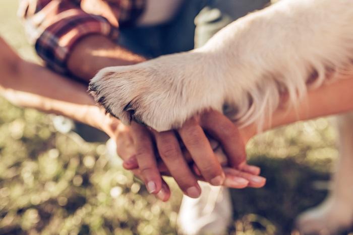Familienhund: Diese passen am besten zu Familie und Kindern (Foto: shutterstock.com / 4 PM production)