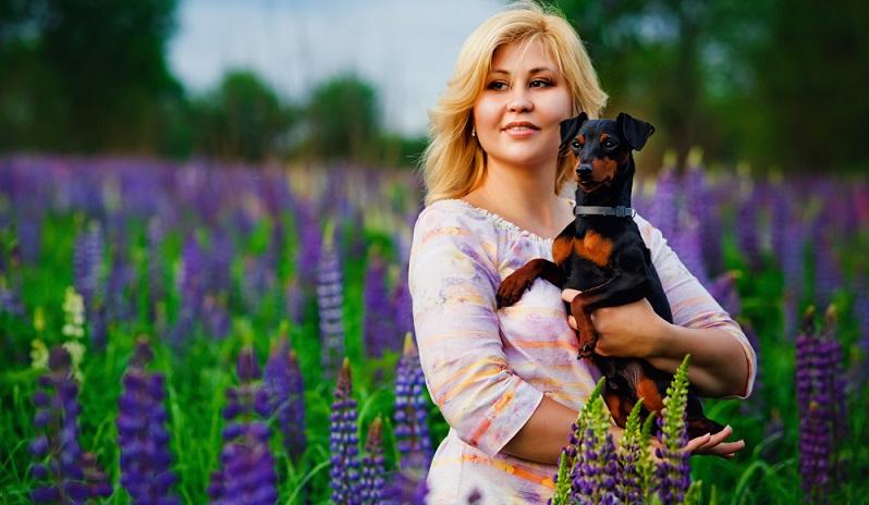 Der Zwergpinscher gehört zu den 100 beliebtesten Hunderassen. ( Foto: Shutterstock-  TsElena  )