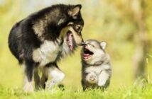 Hundenamen männlich: aber nur für wirklich außergewöhnliche Rüden! (Foto: shutterstock - ValSN)