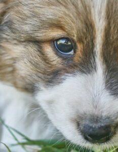 Hundenamen Rüde: 20 ausgefallene und ungewöhnliche Namen für Rüden (Foto: shutterstock - OlegRi)