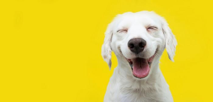 Hundenamen: die 20 ausgefallensten und ungewöhnlichsten Namen für besondere Hunde (Foto: shutterstock - smrm1977)