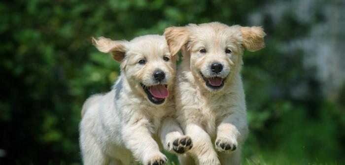 Männliche Hundenamen: 20x für verwegene Rüden (Foto: shutterstock - Orientgold)