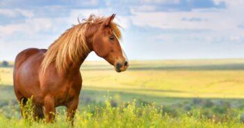Pferdehaftpflichtversicherung: jetzt Tarife vergleichen!