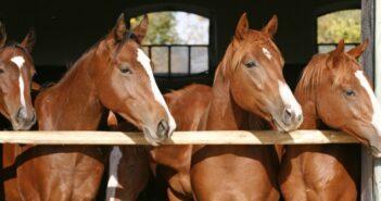 Pferde-OP Versicherung: Ein Muss für jeden Pferdebesitzer