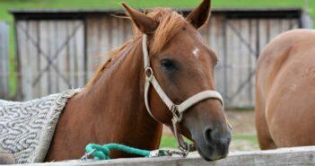 Wie wird der Wert des Pferdes versichert?