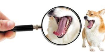 Hund hat Mundgeruch: was tun?