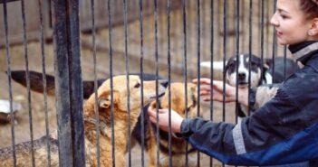 Hunde aus dem Ausland adoptieren: Tierschutz oder unnötige Qual?