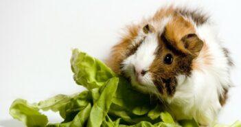 Haustier und Pflanzen