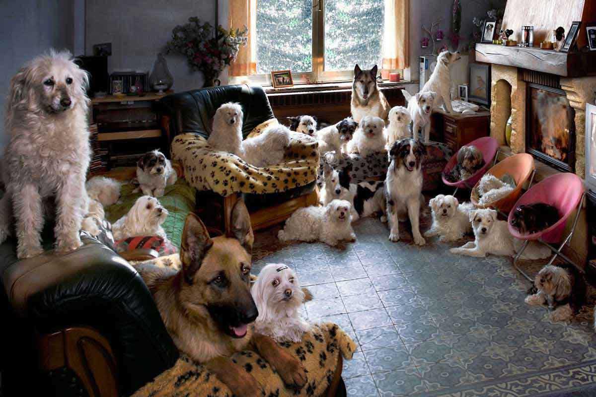 hunde-anschaffung