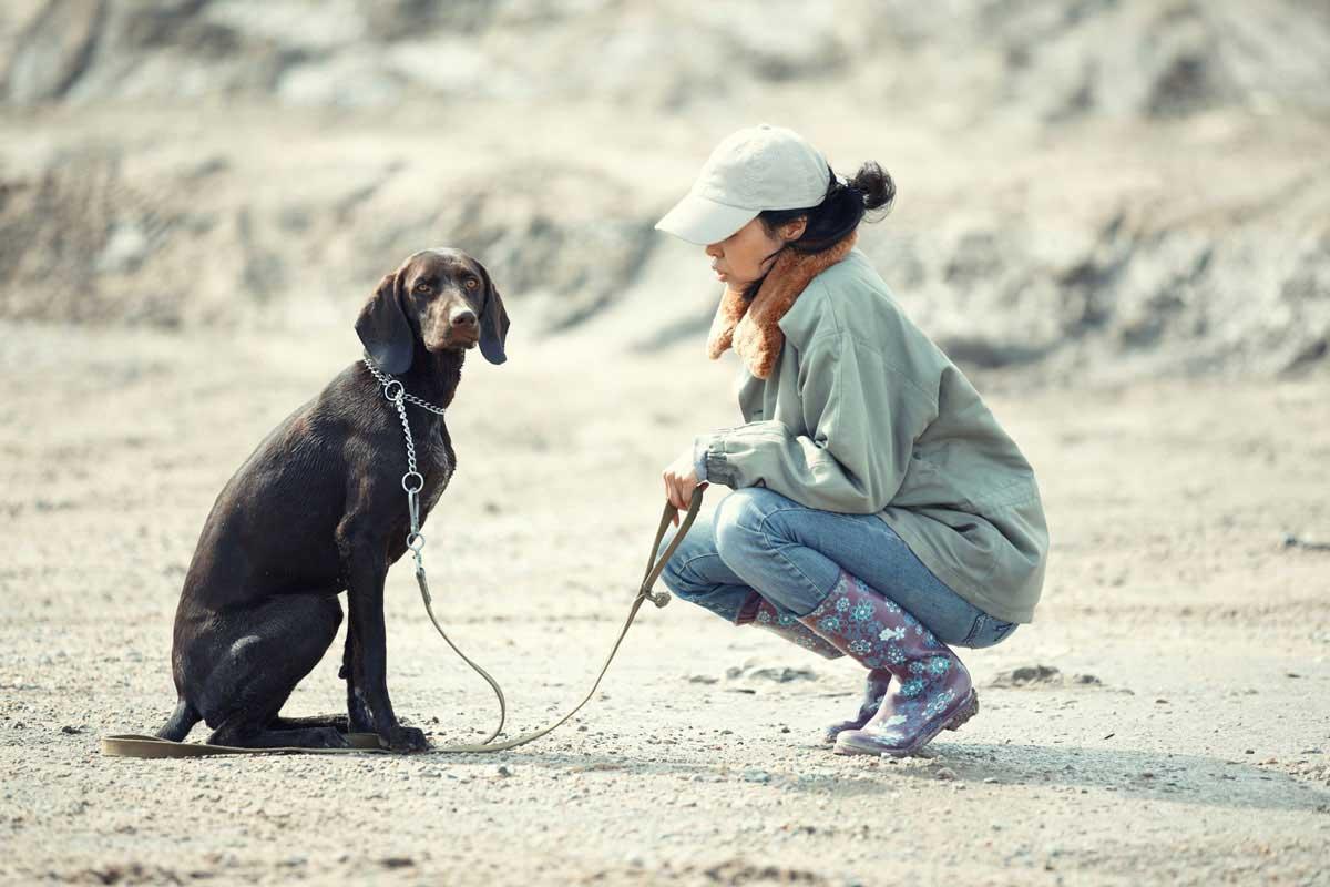 hunde-erziehung