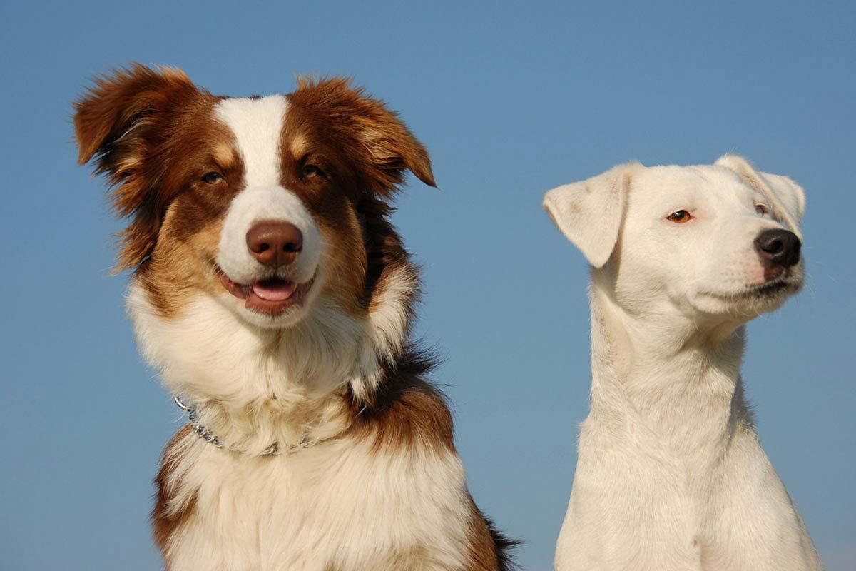 hunde-mood