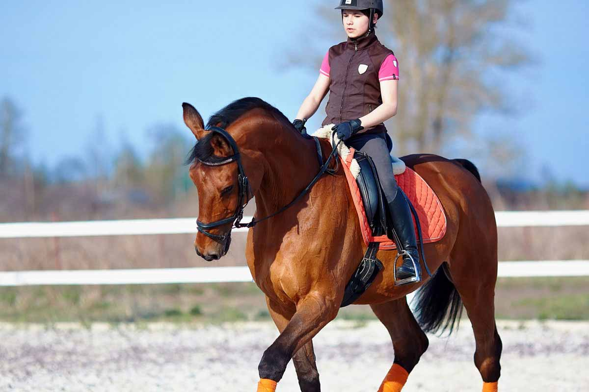 hypoallergenen katzenfutter pferd