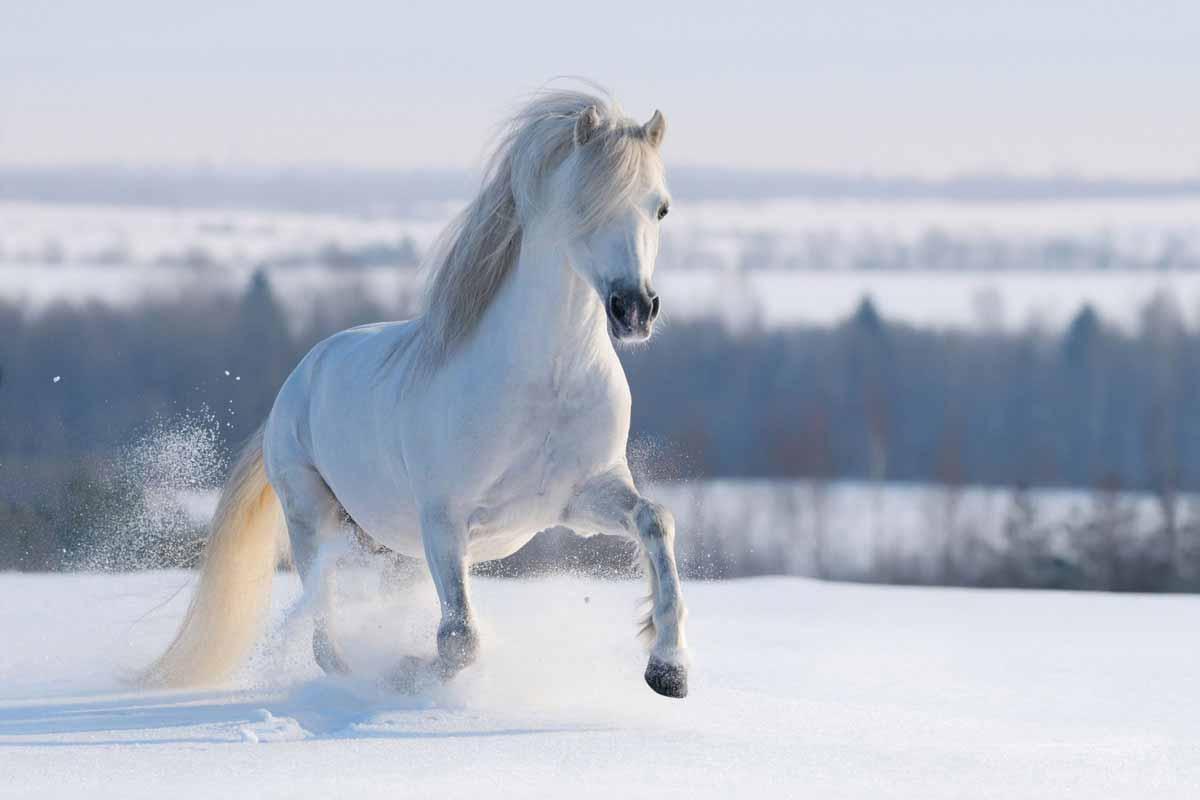 pferde-krankheiten