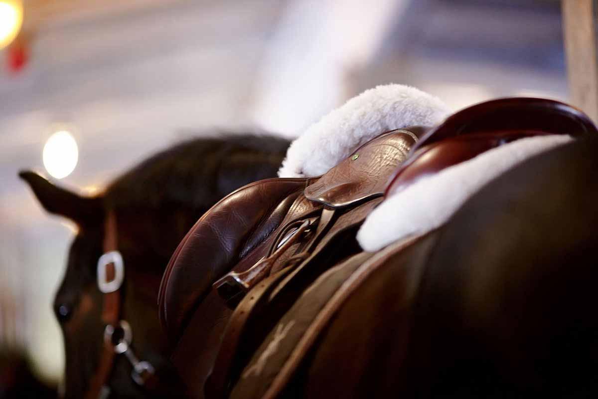 tier hüter haftpflicht pferd