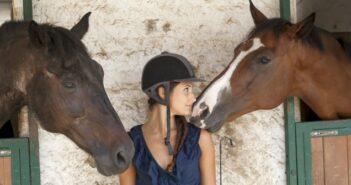 Einstellverträge und Mietvertrag für die Pferdebox