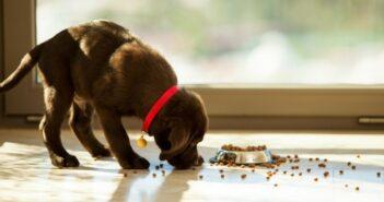 Hunde – Art- und Altersgerecht füttern