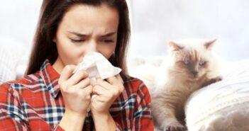 Katzen für Allergiker - Katze halten trotz Katzenallergie?