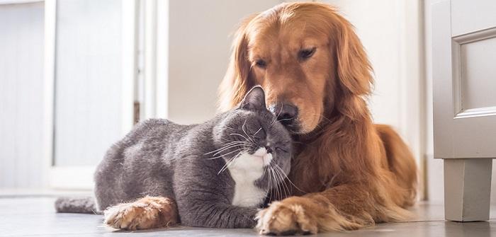 Allergien bei Tieren