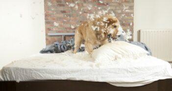 Was ist eine Tierhalterversicherung?