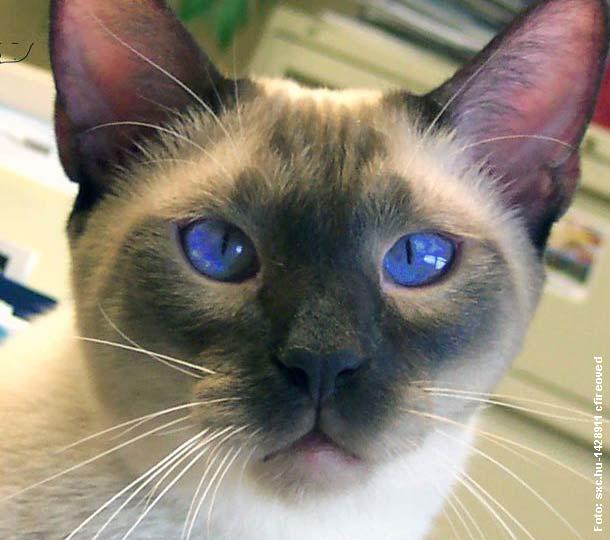 katzen erkennen menschen