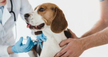 Zeckenschutz für Hund und Katze