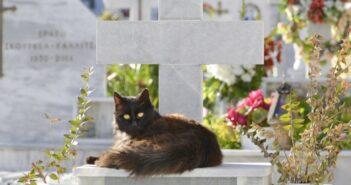 Begräbnis für Katzen