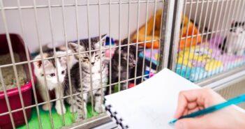 Die Anschaffung einer Katze - Was man beachten muss