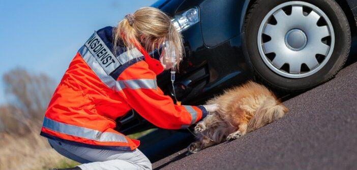 Tiernotdienst & Tierarzt: Adressen, Telefonnummern, alles was du brauchst