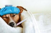 Unterschiede bei der Hundekrankenversicherung