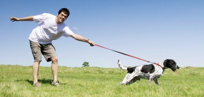 Leinenführigkeit: Hilfe mein Hund zieht an der Leine