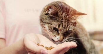 Was essen Katzen am liebsten?