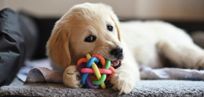 Hundespielzeug: des Welpen bester Freund