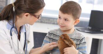 Tierarztbesuche mit Tieren