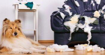 Versicherungen für Hunde