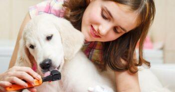 PLATINUM OCC: Oral-Clean+Care, PlaqueOff und Denticur RF2 - Zahnpflege für Hunde